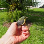 Saving sunbird baby
